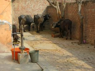 Water taps in Punjab, India